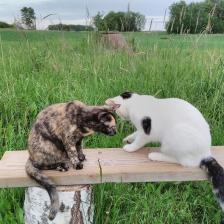Mina katter